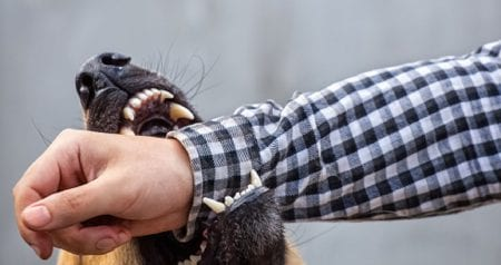German Shepherd Dog Bite Stock Photo